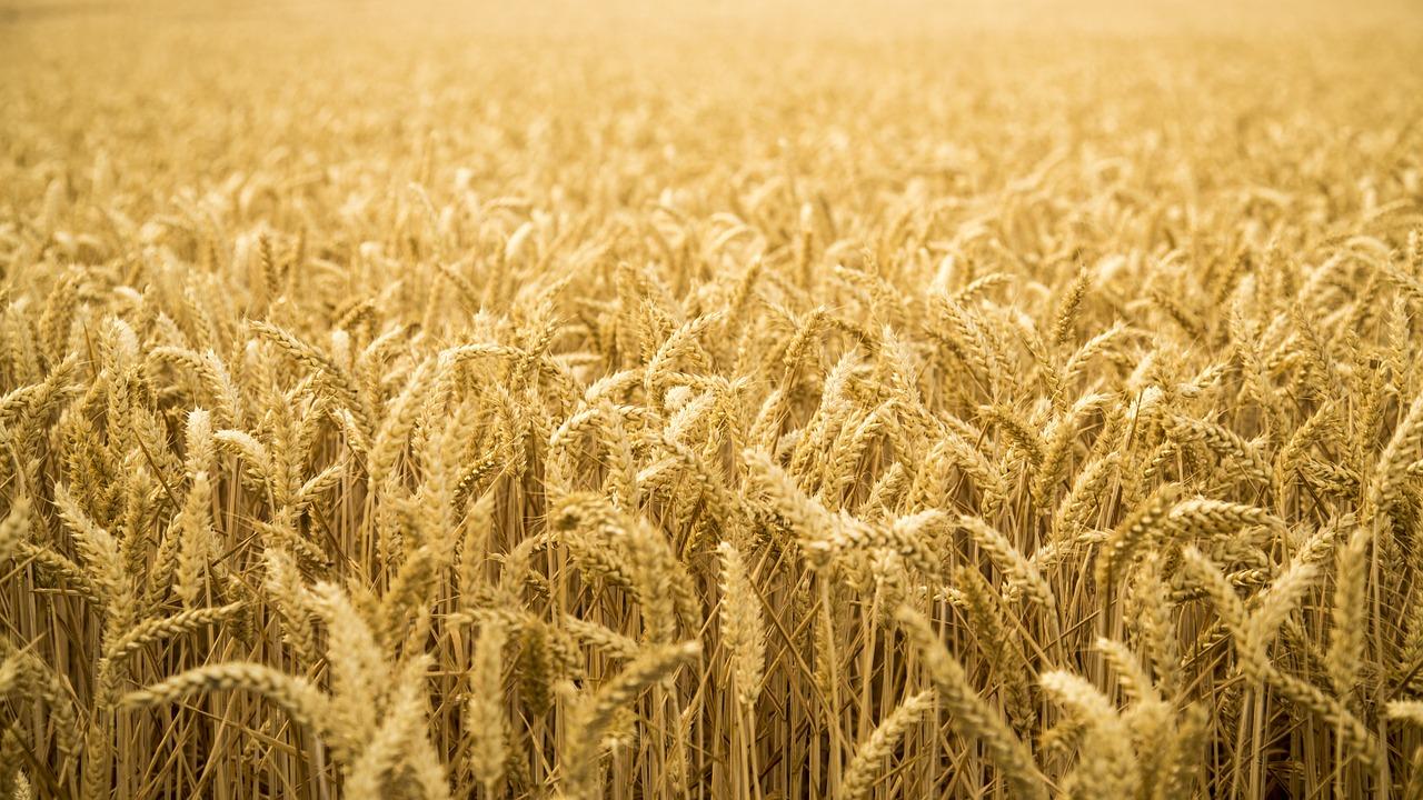 Mezőgazdasági szaktanácsadás